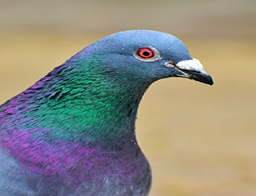 Will Investments in Pigeons Fly Away with Your Money?